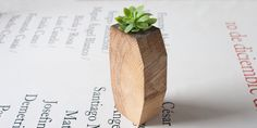 Planteur Succulent - jardinière en bois