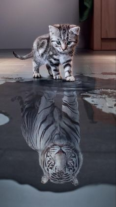 Tagged with cute, cat, cats, tiger; Baby Animals Super Cute, Cute Baby Cats, Cute Little Animals, Kittens Cutest, Super Cute Kittens, Wild Animal Wallpaper, Cute Cat Wallpaper, Lucky Wallpaper, Hd Wallpaper