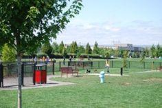 Downtown dog park
