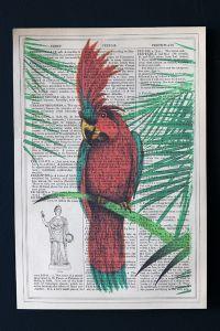 Antique Book Paper Prints - Red Parrot - Unframed