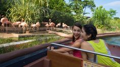 The River Safari Singapore is a fascinating new wildlife park that recreates life in and around the world's rivers.