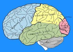 Left Brain  Right Brain Exercises