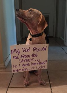My dad rescued me from the streets Funny Dog Memes, Funny Animal Memes, Cute Funny Animals, Funny Dogs, Dog Shaming Photos, Cat Shaming, Dog Varieties, Cute Stories, Funny Dog Pictures