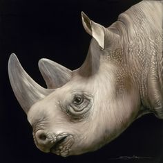 profile of a rhino.jpg