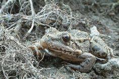 Frog My Photos, Animals, Pictures, Animales, Animaux, Animal, Animais