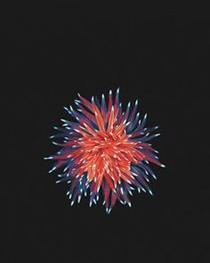 spikes that look like flowers for iphone wallpapers | Fonds d'écran Wallpapers iPad Pro pour iPhone, iPad et ...