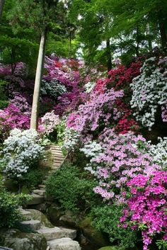 A riot of pink flowers cascading down the steep slope of this garden and a staircase of stone steps leads the visitor through it.