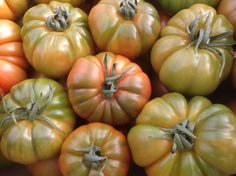 Quasimodo tomato is a new introduction and likely to become a very popular beefsteak variety With an average fruit weight 280 - 300 grams - oz) and deep lobes, Quasimodo produces firm, high quality fruits Beefsteak Tomato, Long Shelf, Tomato Seeds, Heirloom Tomatoes, Beef Steak, Shelf Life, Fall Season, Harvest, Deep
