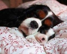Mommy and Puppy Sleeping