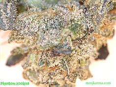 JUST IN...some Phantom Kookies!!! This sativa dominant gets your heart racing! Great for an energy boost before the gym, a hike, or running errands! Try an 8th today for $29 or an ounce for $190!! First time patients get an ounce for $175! mmjkarma.com  #mmj #budtender #loveit #medical #karma #marijuana #medicine #THC