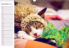 Woll-Katzen - CALVENDO Kalender #katzen #kalender