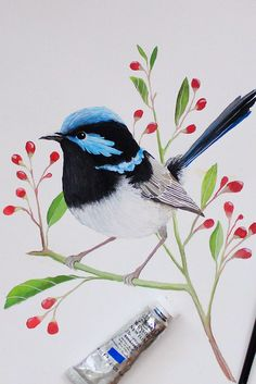 Blue Wren Painting | Watercolour + gouache art by PRINTSPIRING