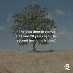 The best time to plant a tree was 20 years ago. The second best time is now. #quote #trees