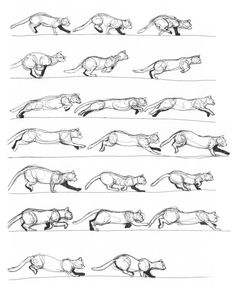Cat running and slowing down ✤ || CHARACTER DESIGN REFERENCES | キャラクターデザイン • Find more at https://www.facebook.com/CharacterDesignReferences if you're looking for: #lineart #art #character #design #illustration #expressions #best #animation #drawing #archive #library #reference #anatomy #traditional #sketch #artist #pose #settei #gestures #how #to #tutorial #comics #conceptart #modelsheet #cartoon #run #walk #running #walking #walk #cycle #galloping || ✤