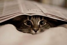 book cat peeking