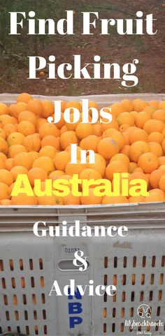 Find Fruit Picking Jobs in Australia Guide and Advice - Travel Trends Jobs Australia, Work In Australia, Moving To Australia, Visit Australia, Australia Living, Australia Travel, Working Holiday Visa, Working Holidays, Fruit Picking Australia
