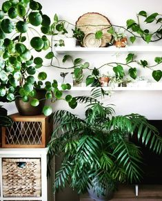Plants will add a touch of color and purity. Find out which are the best office plants that you can use and why, here. Big Indoor Plants, Indoor Outdoor, Big Plants, Best Office Plants, Grand Menage, Corner Plant, Decoration Plante, Palm Plant, Plants Are Friends
