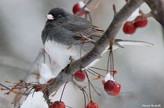 Make Winter Your Top Birding Season -- By providing the food, water and shelter birds need, homeowners can enjoy some of their best backyard birding during cold months.