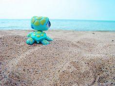 littlest pet shop turtle