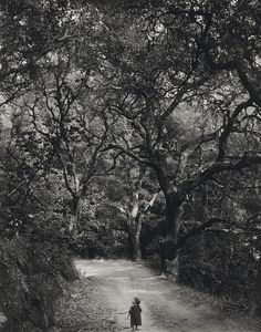 Love this vintage shot's conveyance of wonder in the natural world.~Deb (and the photographer's name, too)    Wynn Bullock  Child on Forest Road, 1958