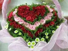 Popular Flower Arrangements Ideas For Valentines Day 18 Funny Happy Birthday Song, Happy Birthday Wishes Images, Birthday Wishes Quotes, Birthday Songs, Happy Birthday Greetings, Happy Birthday In Spanish, Rose Flower Pictures, Beautiful Love Pictures, Popular Flowers