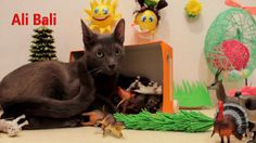Animal Toys for Children and Our Cat