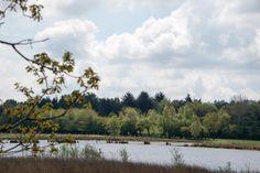 Geniet van de natuur van het Dwingelerveld