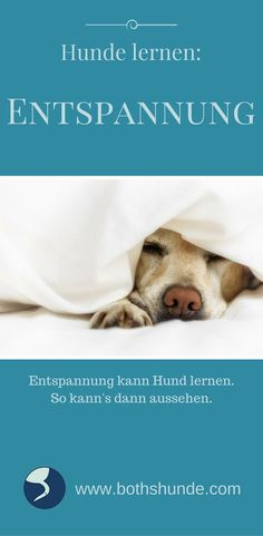 Hund Training Hundetraining Entspannung
