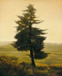 Minerve Tree / by Thomas Darnell