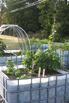Accessible, raised bed garden plot made from recycled totes. The tote garden is in Parsons, KS, home of Kansas AgrAbility partner organizations Assistive Technology for Kansans and Southeast Kansas Independent Living.