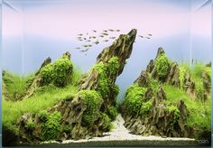 And the winner of the greenaqua.hu Scapers' Day contest is the dragon stone setup called Eweni (60x30x45 cm) by Piga and his team. Congratulations!