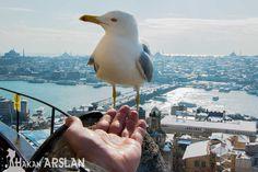 Galata Kulesinde Martıyla Sohbet – Hakan ARSLAN Photography, Profesyonel Fotoğrafçı, Düğün Fotoğrafçısı