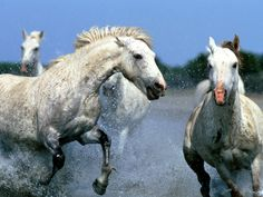 Here Are Beautiful Horses Wallpapers That You Can Use To Beautify Your Desktop