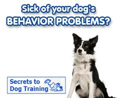Border Collie Mastery Training