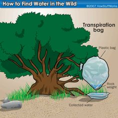 Com trobar aigua.