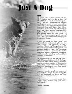 I can not put into words how much I love dogs! This is a great passage for dog lovers! Baby Dogs, Dogs And Puppies, Doggies, Dachshunds, Schnauzers, Chihuahuas, Collie Puppies, Pomeranians, I Love Dogs