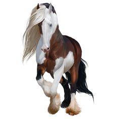 Зевс, верховая лошадь Фриз, Фр� - Лоwади