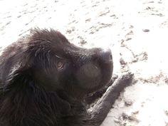 Sirius on the beach