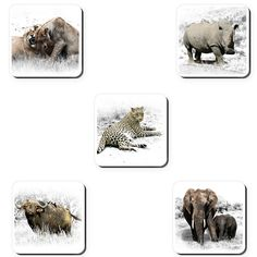 This special set of coasters features beautiful photographs of our iconic Big Set of South African Homes, African Home Decor, Big 5, Home Decor Items, Coaster Set, Photographs, Wildlife, Delivery, Canvas Prints