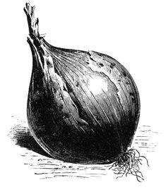 Runåbergs fröer - Gul och Röd Lök Onion, Garden, Artwork, Allotment, Kitchen, Yellow, Garten, Work Of Art, Cooking