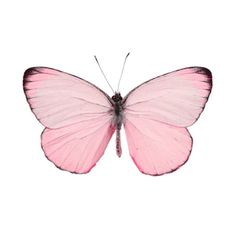 Why isnt there a butterfly emoji??