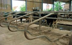 IAE Super Comfort Cow Cubicles