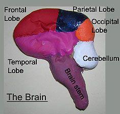 Neuroscience Crafts