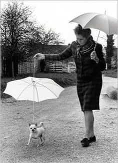 Dog with umbrella by  John DRYSDALE
