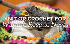 Knit or Crochet for Wildlife Rescue Nests   Top Crochet Pattern Blog