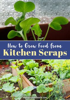 There are many foods that can be re-grown from the kitchen scraps of food we often throw away. This is a great way to save money and recycle. Budget Freezer Meals, Frugal Meals, Budget Recipes, Frugal Tips, Healthy Family Meals, Nutritious Meals, Raised Garden Bed Plans, Gluten Free Menu, Budget Meal Planning