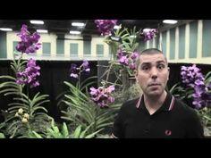 Como 'anabolizar' suas Orquídeas - YouTube