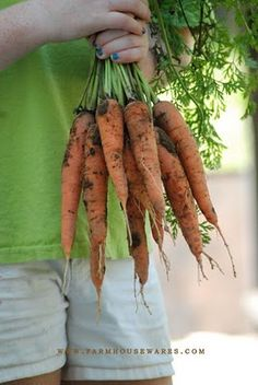 Carrots.  good for the eyes.