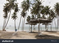 Zumbi beach with its coconut trees