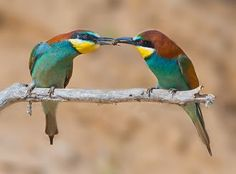 Love is in the Air by- Yaki Zander